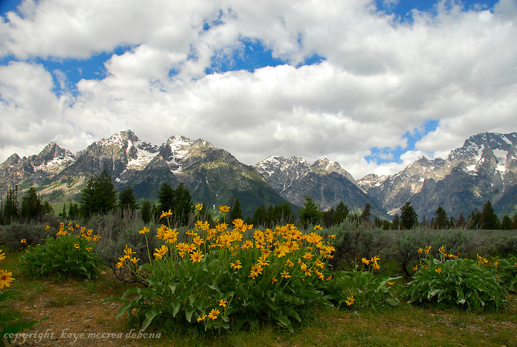 Grand Tetons and Mt. Moran