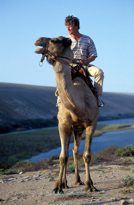 Explorer Benedict Allen on Nelson his largest camel. Allen travelled the entire  length of the Namibian Coastline from South Africa to Angola. Much of the area is desert and is known as the Skeleton coast.