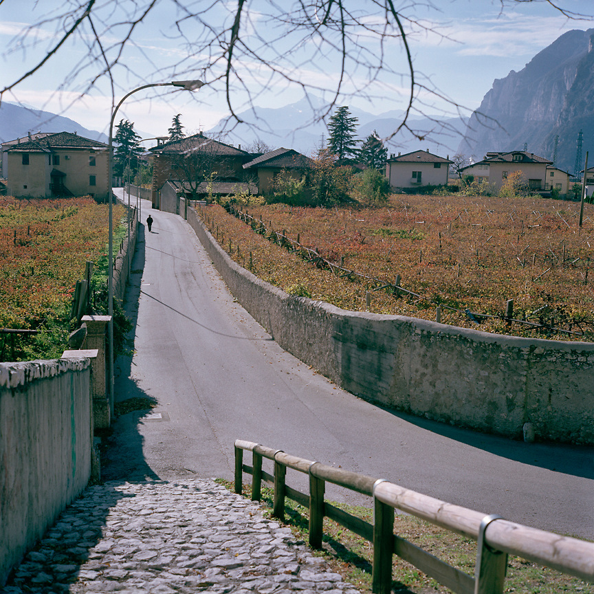 Autumn view of vineyards in the Alps of Northern Italy