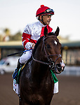 DEC 28: Omaha Beach with Mike Smith win the Malibu Stakes at Santa Anita Park in Arcadia, California on December 28, 2019. Evers/Eclipse Sportswire/CSM