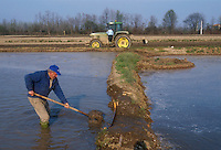 - cultivation of the rice in province of Novara....- coltivazione del riso in provincia di Novara
