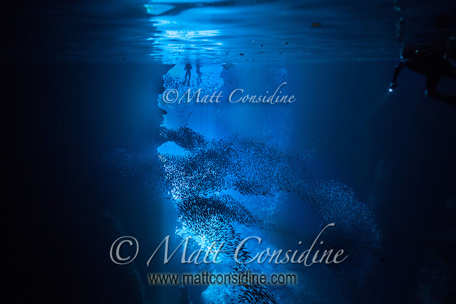Inside Swallows cave looking back at the entrance through beautiful blue light and clear water with fish schooling and swimmers. (Photo by Underwater Photographer Matt Considine)