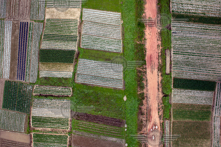 Fields of crops growing in the Shibuzhen district. /Felix Features