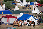 Horses are readied for the morning parade through the camp at Crow Agency Mt.