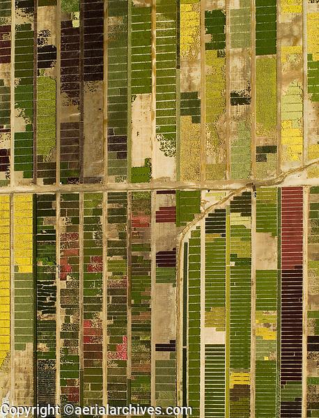 aerial above California flower farm in Fairfield, Solano County, California