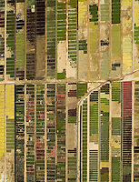 aerial above California flower farm in Fairfield, Solano County, California