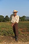 farmer in Viñales Valley (Spanish: Valle de Viñales. The conspicuous cliffs rising like islands from the bottom of the valley are called mogotes.