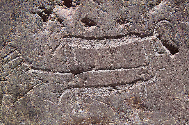 """Close up of prehistoric  petroglyphs, rock carvings, of animal  carved by the the prehistoric Camuni people in the Copper Age around the 3rd milleneum BC, Stele """"Bagnolo 1"""" found in 1972 from Malegno near Bangnolo Ceresolo. Museo Nazionale della Preistoria della Valle Camonica ( National Museum of Prehistory in Valle Cominca ), Lombardy, Italy. Grey Art Background"""
