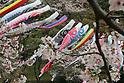 Carp streamers are displayed at the Kodomonokuni park