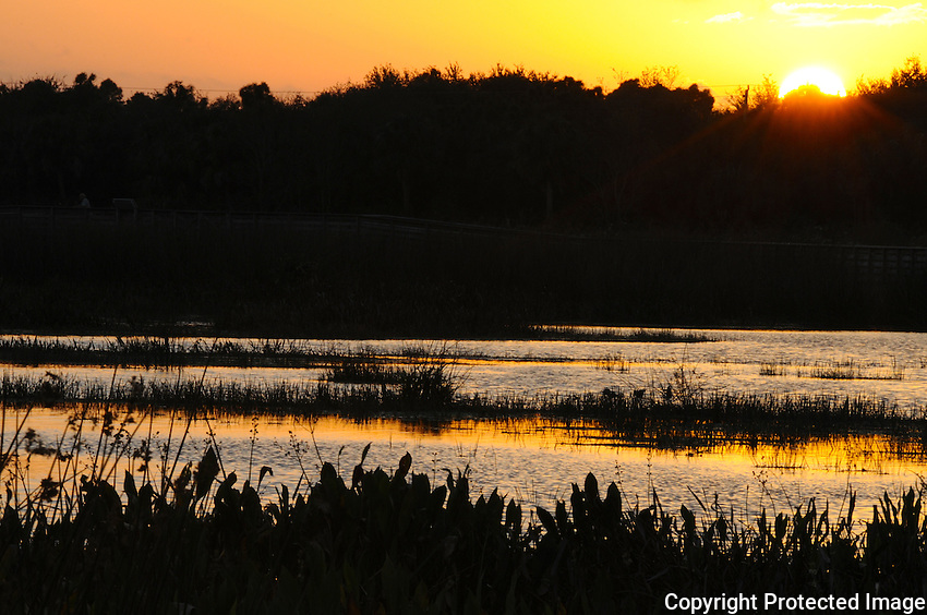 Sunset casts a golden glow  lending illumination to the wetlands.Photographed at Arthur Marshall Loxahatchee Preserve, Boynton Beach, Florida.