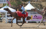 Brade Emmans races in the 54th International Camel Races in Virginia City, Nev., on Friday, Sept. 6, 2013.  <br /> Photo by Cathleen Allison