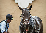 DEL MAR, CA - NOVEMBER 02: A horse is washed after /mw/at Del Mar Thoroughbred Club on November 2, 2017 in Del Mar, California. (Photo by Jamey Price/Eclipse Sportswire/Breeders Cup)