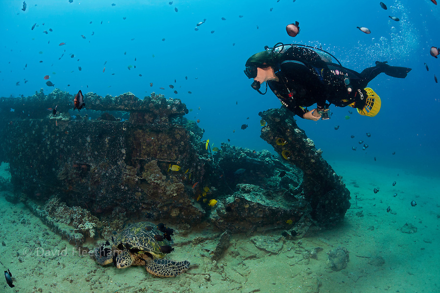 A diver (MR) on an underwater scooter and a green sea turtle, Chelonia mydas, at the Landing Craft wreck of Makena, Maui, Hawaii.