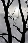 Evil Tree, Costa Mesa, CA.