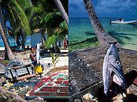Fresh caught Barracuda, Tobacco Caye, Belize