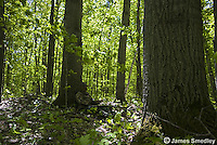 Wild turkey hunter disguised with camouflage in forest