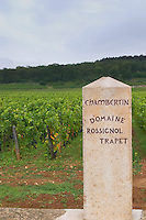 Vineyard. Chambertin Grand Cru, Domaine Rossignol Trapet.  Gevrey Chambertin, Cote de Nuits, d'Or, Burgundy, France