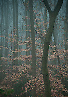 Misty forest trees in autumn, New Jersey, USA
