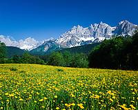 Austria, Tyrol, near Ellmau: flower meadow and Wilder Kaiser mountains   Oesterreich, Tirol, bei Ellmau: Blumenwiese vorm Wilden Kaiser