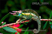 Carl, ANIMALS, wildlife, photos(SWLA3884,#A#)