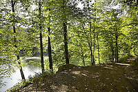 FOREST_LOCATION_90111