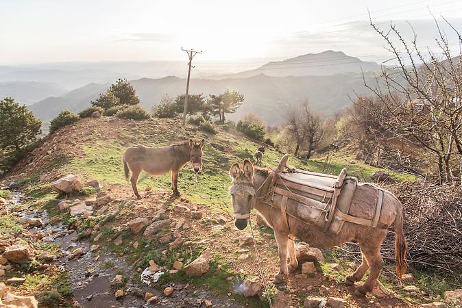 Shpati Bergregion, 2013, Strom wird  in Albanien hauptsächlich aus Wasserkraft gewonnen. Zu kommunistischen Zeiten wurde das Land elektrifiziert. Die Infrastruktur kann aber mit dem hohen Verbrauch heutzutage nicht mithalten