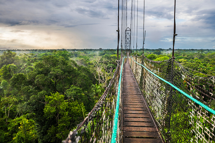 Jungle Canopy Walk in Amazon Rainforest at Sacha Lodge Coca Ecuador South America & Jungle Canopy Walk in Amazon Rainforest at Sacha Lodge Coca ...