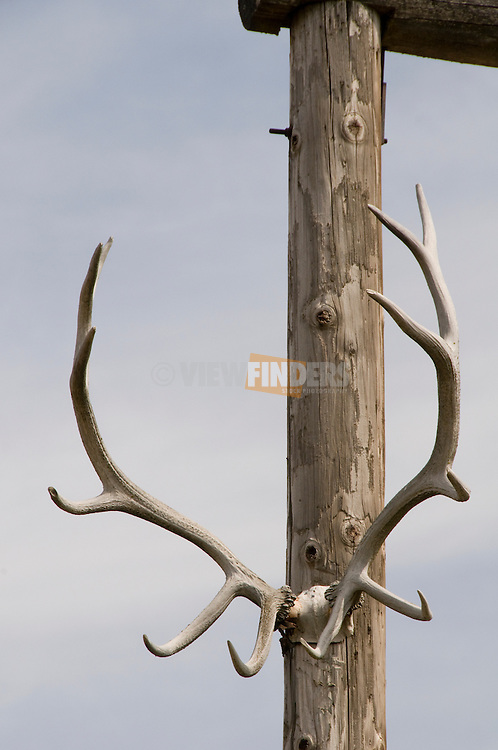 Antlers on farm entrance
