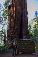 Standing in front of the Stagg Tree, the largest-circumference giant sequoia (Sequoiadendron giganteum) in the world and the fifth most voluminous.