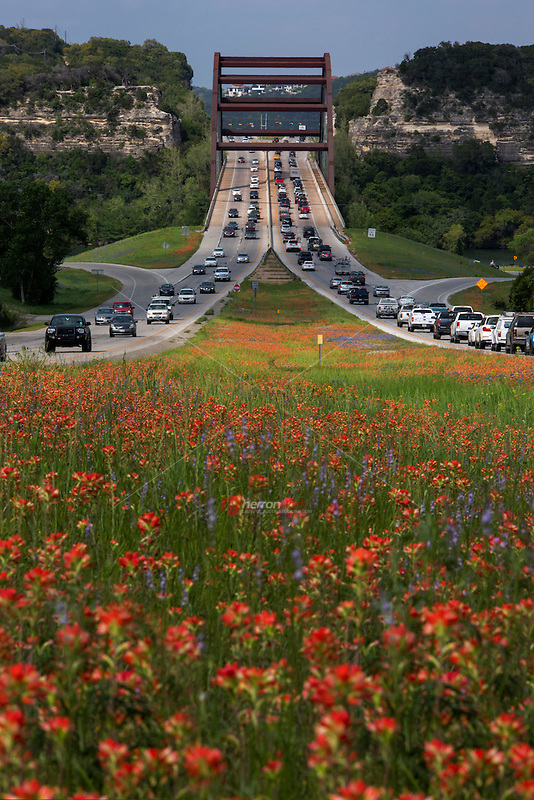 Colorful bluebonnets and vivid red Indian Paintbrush wildflowers pop with color as they line the inside median of the 360 Capitol of Texas Highway, framing the 360 Bridge, making for a relaxing drive-time commute  - Stock Image.