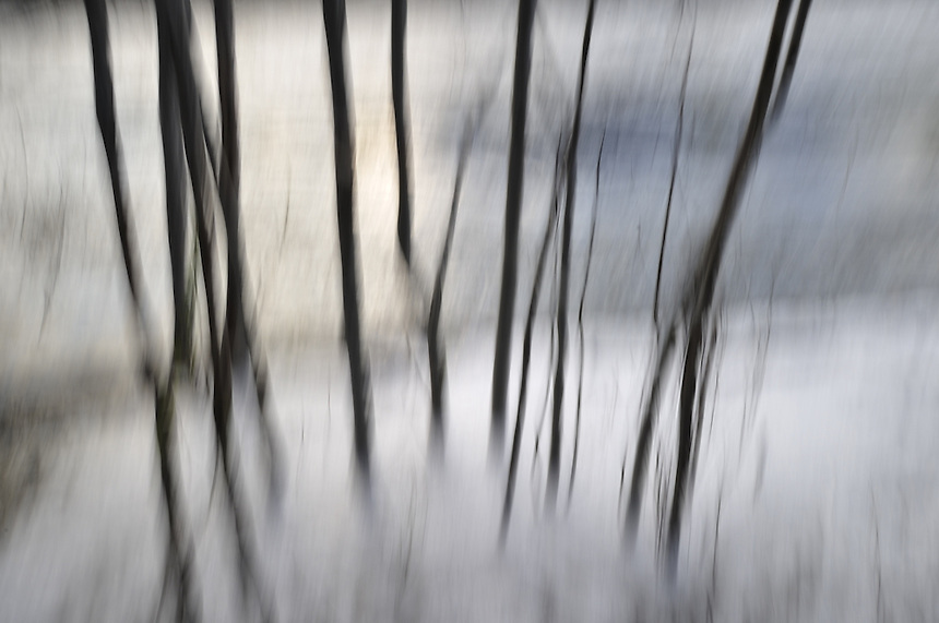 Trees in river Home decor, Trond Are Berge