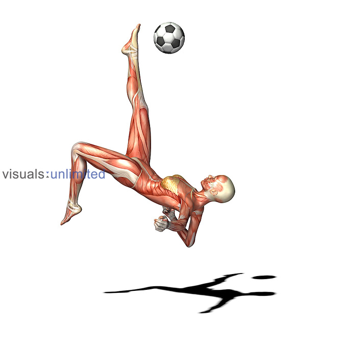 Biomedical illustration of the musculature of a woman playing soccer