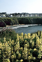 Mendocino with yellow lupine.  Drum scan from 35mm chrome.. © John Birchard