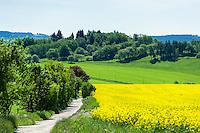 Germany; Free State of Thuringia, near Barigau: landscape with yellow rape field | Deutschland, Freistaat Thueringen, bei Barigau: Landschaft mit Rapsfeld und Fahrweg