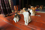 Jack's Cat Cafe. Hoi An, Vietnam. April 15, 2016.