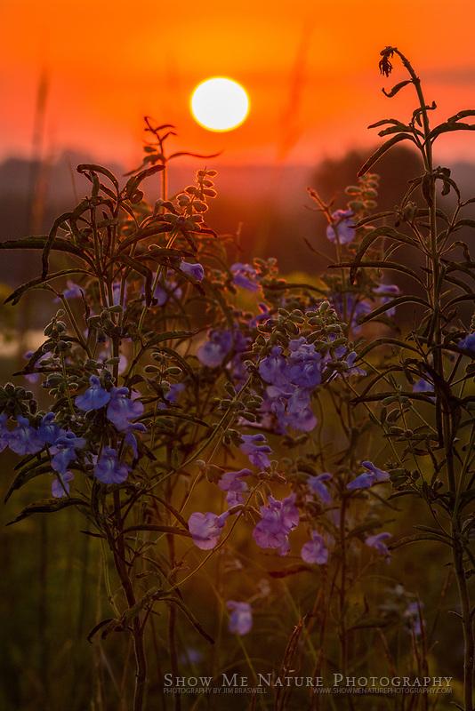 Sunrise over Snowball Hill Prairie, MO