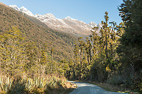 Hollyford Road in Hollyford Valley through native rainforest, Fiordland National Park, UNESCO World Heritage Area, Southland, New Zealand, NZ
