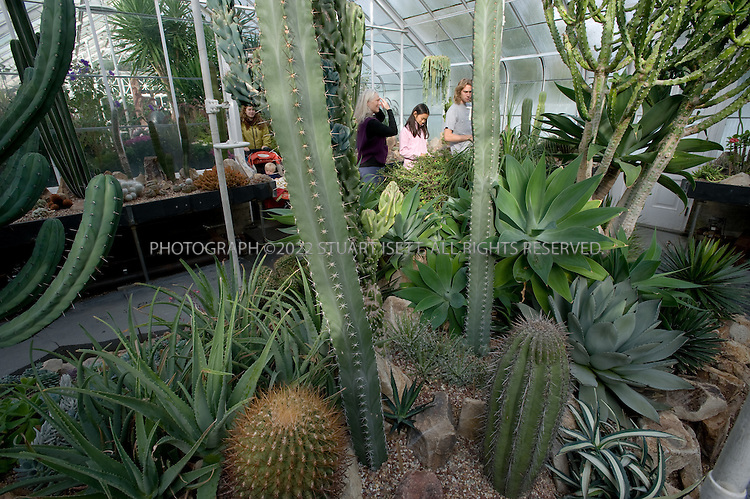 10/10/2008--Seattle, WA, USA..The glass-roofed conservatory in Seattle's Volunteer Park (1400 E Galer St, 206-684-4743; www.seattle.gov), was fashioned after London?s Crystal Palace. Here: the cactus room...Part of the Olmsted brother?s turn of the century vision for the city?s parks and public boulevards, Volunteer Park is often overlooked by locals..©2008 Stuart Isett. All rights reserved.