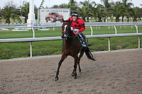 January 17, 2015:  String King ridden by James Graham wins the Col.E.R. Bradley Handicap race at the New Orleans Fairgrounds course. Steve Dalmado/ESW/CSM