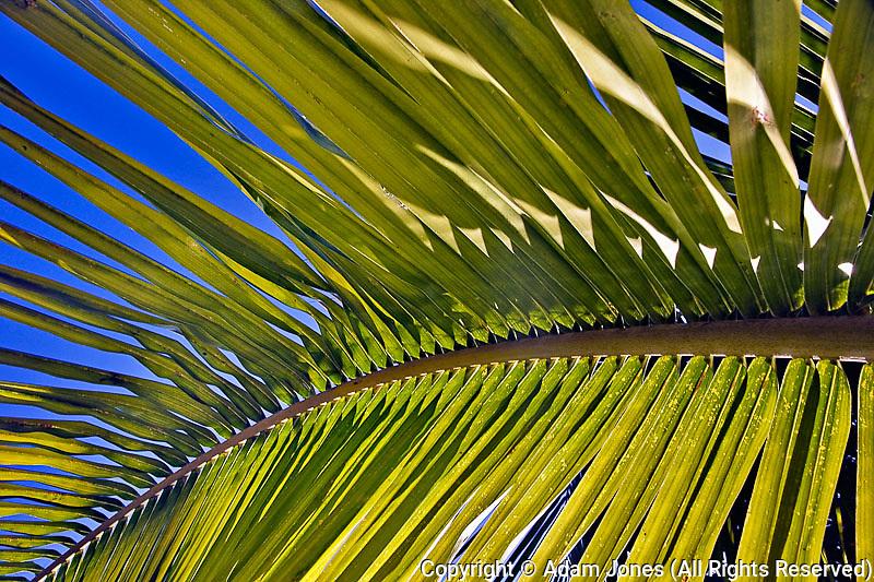 Palm frond pattern, Delray Beach, Florida