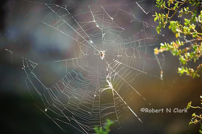 spider web in the desert