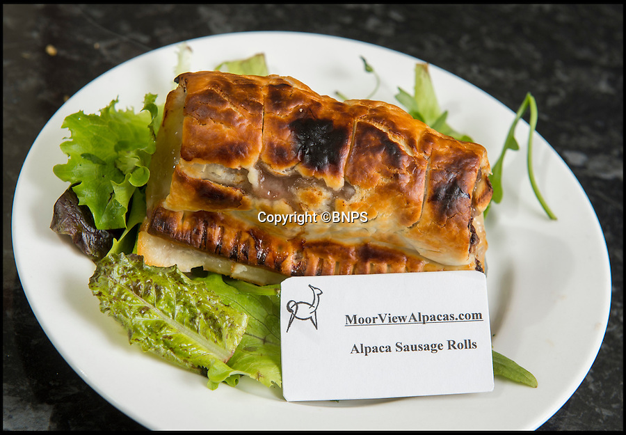 BNPS.co.uk (01202 558833)<br /> Pic: PhilYeomans/BNPS<br /> <br /> Cute, cuddley...tasty!<br /> <br /> Alpaca sausage roll.<br /> <br /> A Cornish farmer has come up with the latest in tasty treats...Alpaca pies. <br /> <br /> Alpaca breeder Emma Collison has started selling the unusual snacks from her farm on Bodmin moor in Cornwall. <br /> <br /> Alpaca, pasties, rolls and pies are now flying off the shelves as people develop a taste for the South American Camelid's lean, low fat &amp; low cholesterol meat. <br /> <br /> Emma believe's that to keep a healthy population of alpacas you must make them useful in as many ways as possible, so along with the pies and pasties she also sells duvets, pillows and fleeces made with the alpacas extremely fine wool.