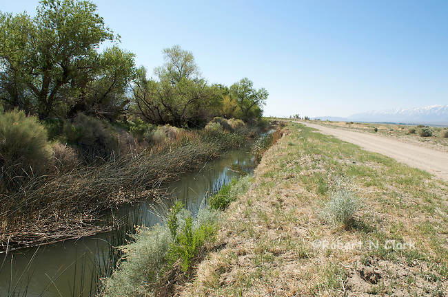 Channel flowing into rewatered lower Owens River