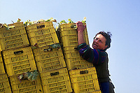 Contadini durante il loro lavoro. Farmers during their work....