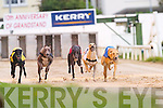 ABOVE: Firies Patsy (No 1).winner of the second race.in the upcoming event.N2/N3 525Yds at Kingdom.Greyhound Stadium, Tralee,.on Saturday night.