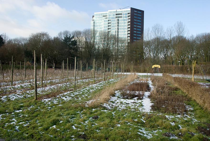 Utrecht, 3 febr, 2010.Gebied rond Galgenwaard,Biologischemoestuin in de stad..(c)Renee Teunis.