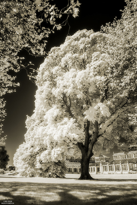 Approaching The Temperate Green House at Kew Gardens in Infrared