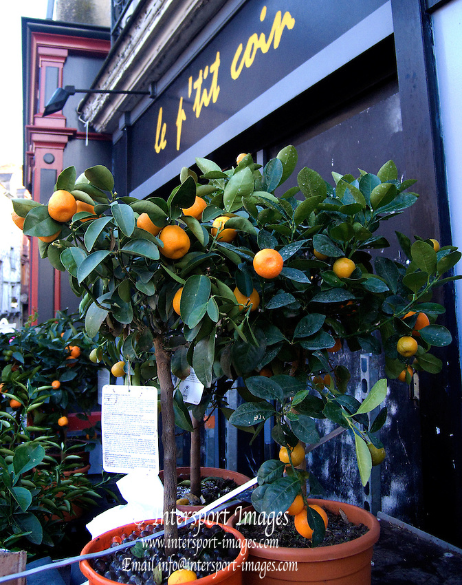 Rennes, FRANCE, General View, GV,  produce, Small Orange trees/bushes on display in Rennes Market, Saturday morning market, Brittany. [2009 Boxing day Market]  Saturday  26/12/2009 [Mandatory Credit Peter Spurrier Intersport Images]
