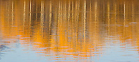 Aspens are reflected in the Snake River at Oxbow Bend.