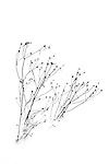 winter sketch plant in winter